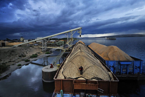 A terminal to export 8.8 million tons of coal annually has been proposed at the Port of Morrow at Boardman. But a slump in coal prices is leaving it and two other export projects looking financially shaky. Jamie Francis/The Oregonian